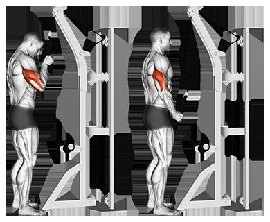 Exercise Database - Triceps — Jase Stuart - The Better Body Coach